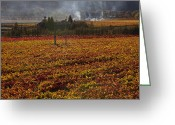 Grapevines Greeting Cards - Autumn In Napa Valley Greeting Card by Garry Gay