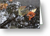 Turning Leaves Greeting Cards - Autumn in New York City Greeting Card by Chris Ann Wiggins