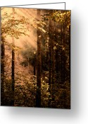 Faux Vintage Greeting Cards - Autumn In The Morning Light Greeting Card by Zeana Romanovna