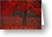 Red Maple Greeting Cards - Autumn Greeting Card by Jane Melgaard