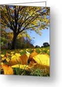 Backlit Greeting Cards - Autumn landscape Greeting Card by Elena Elisseeva