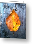 Turning Leaves Greeting Cards - Autumn Leaf Greeting Card by Jeff Stein