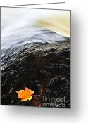Maple Leaf Greeting Cards - Autumn leaf on river rock Greeting Card by Elena Elisseeva
