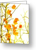 Colorful Photography Mixed Media Greeting Cards - Autumn Leaves Abstract Greeting Card by Andee Photography