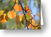 Adrienne Petterson Greeting Cards - Autumn Leaves Greeting Card by Adrienne Petterson