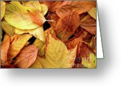 Orange Greeting Cards - Autumn leaves Greeting Card by Carlos Caetano