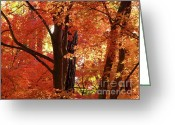 All Tree Greeting Cards - Autumn Leaves Greeting Card by Carol Groenen