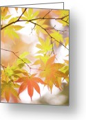 Sunlight Greeting Cards - Autumn Leaves Greeting Card by Cocoaloco