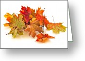 Fall Leaves Photo Greeting Cards - Autumn leaves Greeting Card by Elena Elisseeva