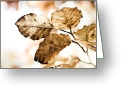 October Greeting Cards - Autumn Leaves Greeting Card by Frank Tschakert
