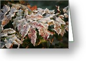 Interior Design Greeting Cards - Autumn Leaves in a Frozen Winter World Greeting Card by Christine Till