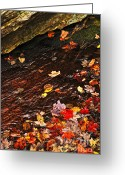 Boulder Greeting Cards - Autumn leaves in river Greeting Card by Elena Elisseeva
