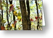 Fall Scenes Greeting Cards - Autumn Leaves Greeting Card by Larry Bishop