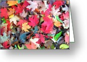 Changing Colors Greeting Cards - Autumn Leaves Greeting Card by Mitch Cat