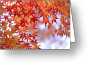 Maple Leaf Greeting Cards - Autumn Leaves Greeting Card by Myu-myu