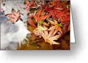 Ost Photo Greeting Cards - Autumn Leaves Greeting Card by Nadya Ost
