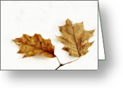 Autumn Photographs Greeting Cards - Autumn Leaves on Snow Greeting Card by Randy Steele