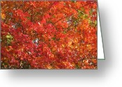 Texas.photo Photo Greeting Cards - Autumn Leaves Greeting Card by Shawn Hughes
