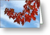 Red Autumn Trees Greeting Cards - Autumn Leaves Tree Red Orange art prints Blue Sky White Clouds Greeting Card by Baslee Troutman Fine Art Prints