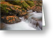 Cascade Greeting Cards - Autumn Litter Greeting Card by Mike  Dawson