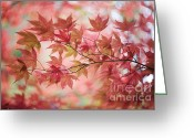 Japanese Maple Greeting Cards - Autumn Loving Greeting Card by Jacky Parker