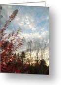 Alto Cumulus Greeting Cards - Autumn Maple and Sky Greeting Card by Mick Anderson