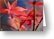 Red Maple Greeting Cards - Autumn Maple Greeting Card by Kaye Menner
