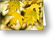 Maple Photographs Greeting Cards - Autumn Maple Leaves Greeting Card by James Bo Insogna