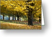 Trunk Greeting Cards - Autumn Maple Tree Fall Foliage - Wonderland Greeting Card by Dave Allen