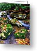Trout Stream Greeting Cards - Autumn Monongahela National Forest Greeting Card by Thomas R Fletcher