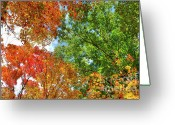 Outdoor Canopy Greeting Cards - Autumn Nature Greeting Card by Oleksiy Maksymenko