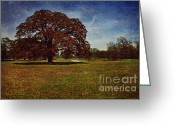 Rural Art Greeting Cards - Autumn Night Oak Tree Greeting Card by Lisa Holmgreen