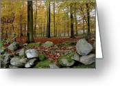 Fyn Greeting Cards - Autumn on Fyn Greeting Card by Robert Lacy