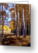 Brown Digital Art Greeting Cards - Autumn Paint Chama New Mexico Greeting Card by Kurt Van Wagner