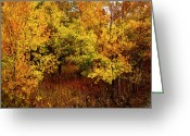 Scene Mixed Media Greeting Cards - Autumn Palette Greeting Card by Carol Cavalaris