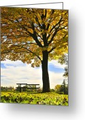 Canopy Greeting Cards - Autumn park Greeting Card by Elena Elisseeva