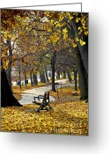 Benches Photo Greeting Cards - Autumn park in Toronto Greeting Card by Elena Elisseeva