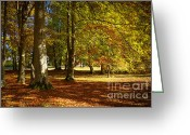 Red Autumn Trees Greeting Cards - Autumn Park Greeting Card by Lutz Baar