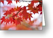 Red Maple Greeting Cards - Autumn Pastel Greeting Card by Kaye Menner