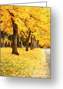 Spokane Greeting Cards - Autumn Perspective Greeting Card by Carol Groenen