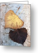 Brown Leaf Greeting Cards - Autumn Poplar Leaves Greeting Card by The Forests Edge Photography
