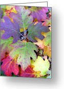 October Greeting Cards - Autumn Rainbows Greeting Card by Mindy Newman