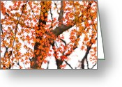 Colours Greeting Cards - Autumn red leaves on a tree   Greeting Card by Ulrich Schade
