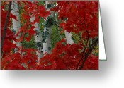 Chromatic Greeting Cards - Autumn Red Maple Leave Frame Greeting Card by Medford Taylor