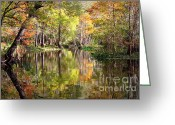 Florida Swamp Greeting Cards - Autumn Reflection on Florida River Greeting Card by Carol Groenen