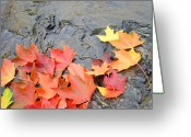 Red Leaves Greeting Cards - Autumn River Landscape Red Fall Leaves Greeting Card by Baslee Troutman Fine Art Photography
