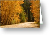 Foilage Greeting Cards - Autumn Road Greeting Card by James Bo Insogna