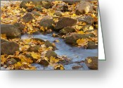 Autumn Colors Greeting Cards - Autumn slipping Away 0437 Greeting Card by Michael Peychich