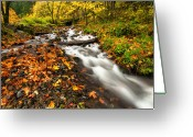 Split Greeting Cards - Autumn Split Greeting Card by Mike  Dawson