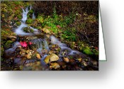 Waterfalls Greeting Cards - Autumn Stream Greeting Card by Chad Dutson